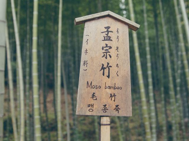 Kyoto Sights – Arashiyama, A Bamboo Haven